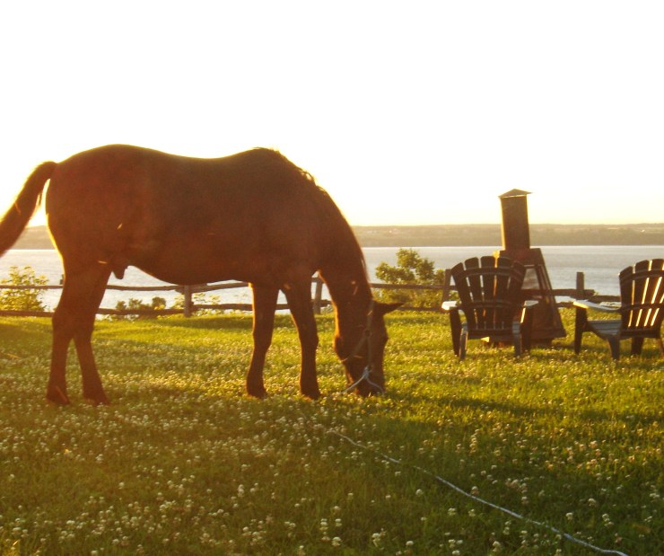 Our horse Ben - Our farm in Quebec - My Yellow Farmhouse