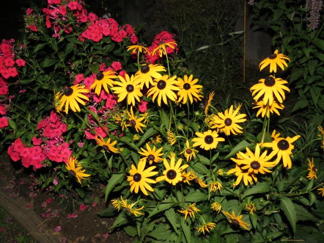 Night Garden - My Yellow Farmhouse 2014