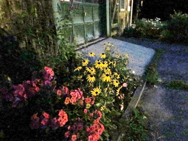 Night Garden - My Yellow Farmhouse 2014