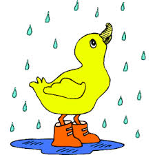 duck in the rain